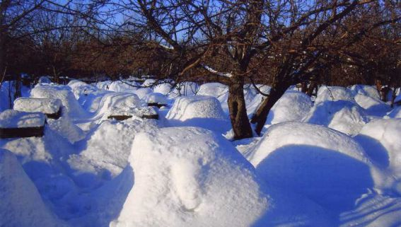 paseka-zimoy