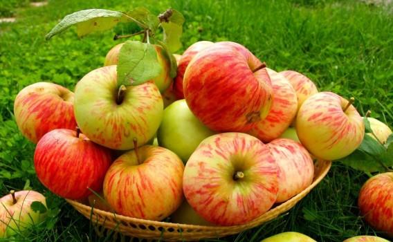 Яблоки сезонные от Знатного Фермера